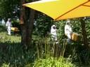 Récolte du miel du Cérizot